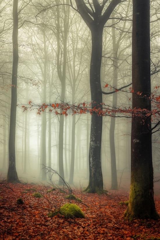 A sense of fog 550
