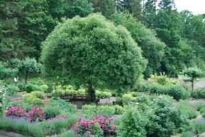 Örtträdgården 300px